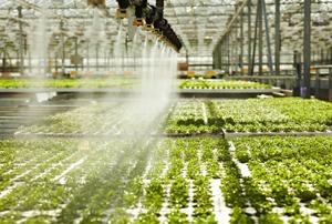 Programe de fertilizare
